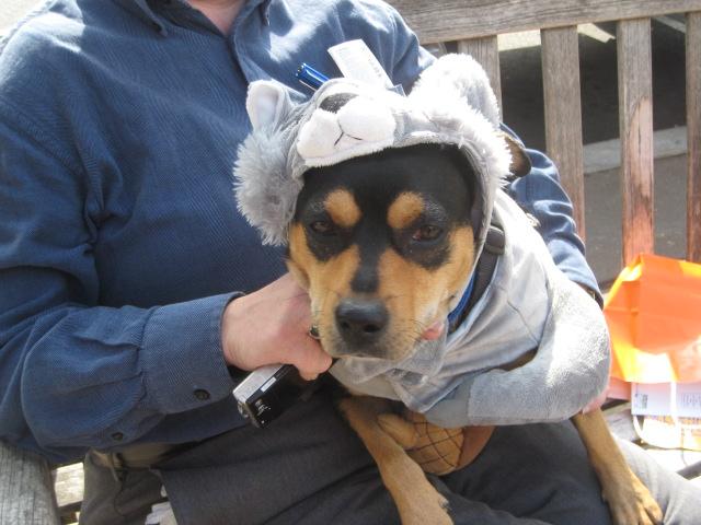 Princeton Dog Halloween Parade | Rescue Me